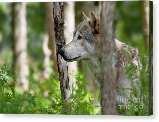Watcher In The Woods Canvas Print by Michael Cummings