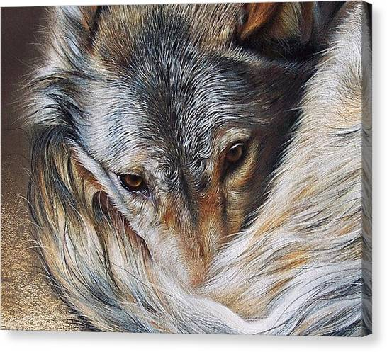 Watchful Rest -close-up Detail Canvas Print