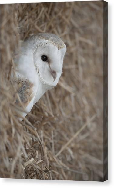 Watchfull Barn Owl Canvas Print