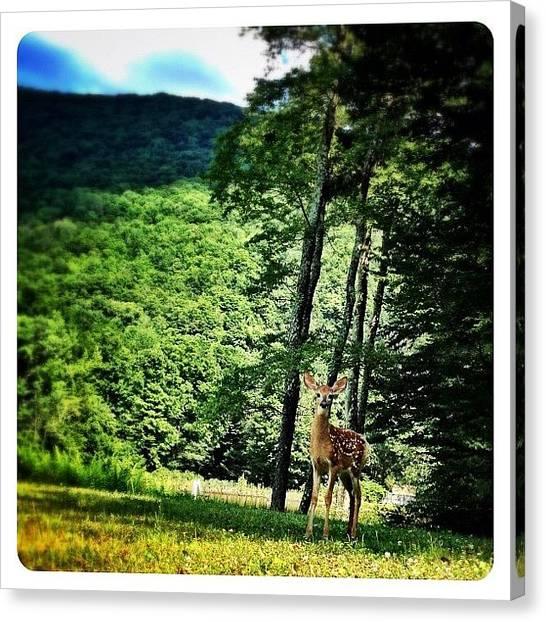 Wildlife Canvas Print - Watching Me. Watching You by Natasha Marco