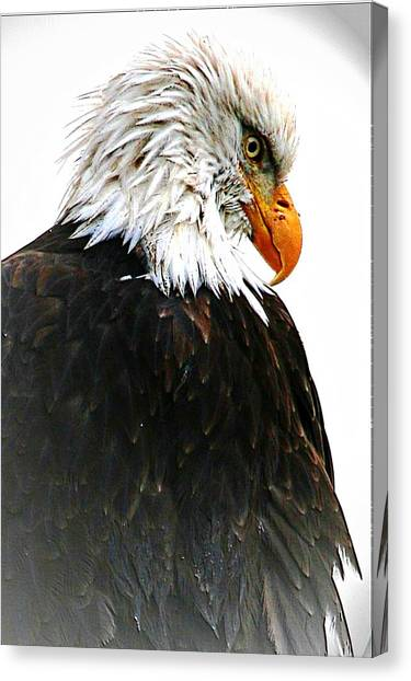 Watching Over You Canvas Print by Carrie OBrien Sibley