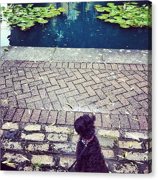 Schnauzers Canvas Print - Watching The World Go By! #ozzie #pond by Laurena Pascoe