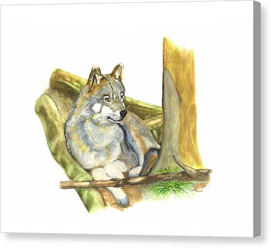 Watching Wolf Canvas Print by Peter Edward Green