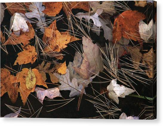 Water And Leafs  Canvas Print by Mike Stouffer