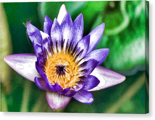 Water Color Lily Canvas Print