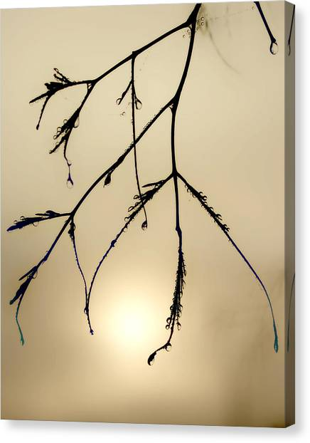 Water Droplets Canvas Print by Jim Painter