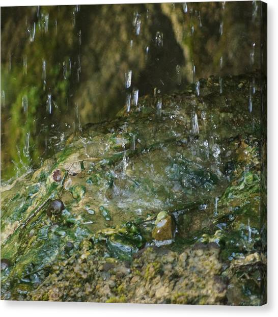 Water Droplets Canvas Print by Joseph Shaffer