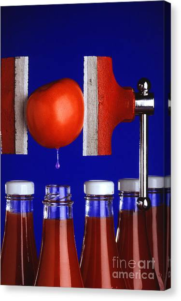 Ketchup Canvas Print - Water Extraction From Tomato by Photo Researchers