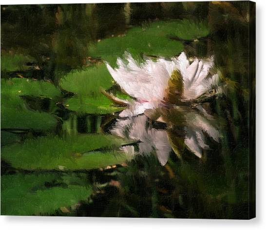 Water Lilly Canvas Print by Heiko Mahr