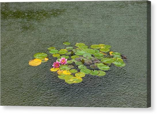 Water Lilly In Rain -2 Canvas Print by Muhammad Hammad Khan