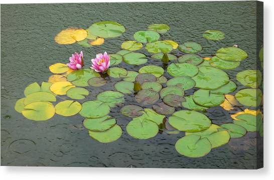 Water Lilly In Rain -3 Canvas Print by Muhammad Hammad Khan
