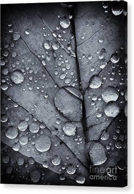 Waterdrops II Canvas Print