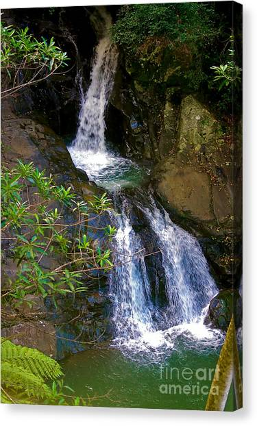 Waterfall In The Currumbin Valley Canvas Print