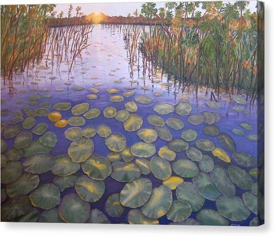 Waterlillies South Africa Canvas Print