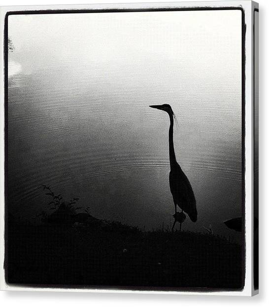 Water Birds Canvas Print - Waters Edge by Dave Edens