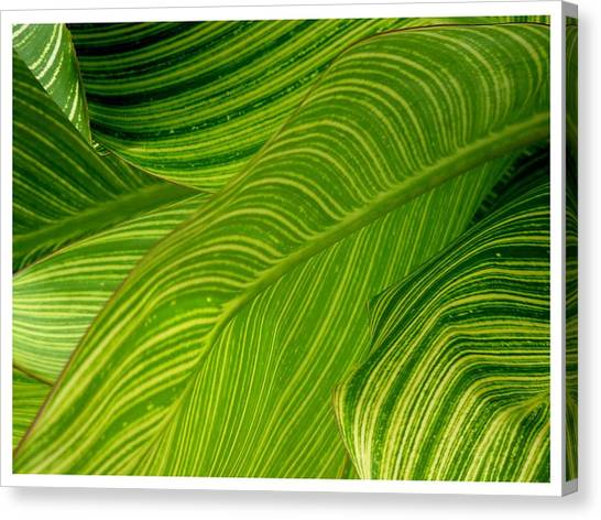 Waves Of Green And Yellow Canvas Print