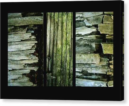 Weathered Canvas Print by Ann Powell