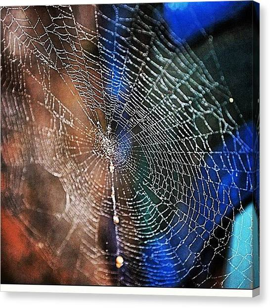 Spider Web Canvas Print - Web by Jessica Daubenmire