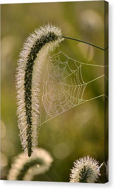 Webbed Tail Canvas Print