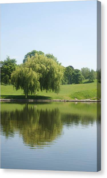 Weeping Willow Tree.  Canvas Print
