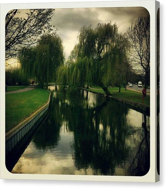 Weeping Willows Canvas Print - Weeping Willows By The River! by Dahlia Ambrose