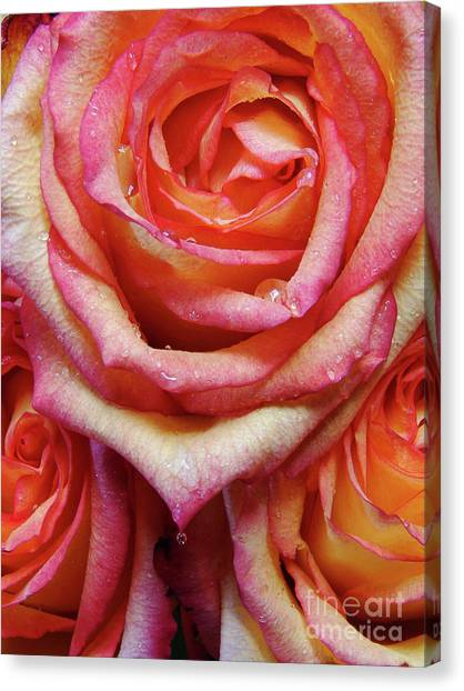 Weepy Woses Canvas Print