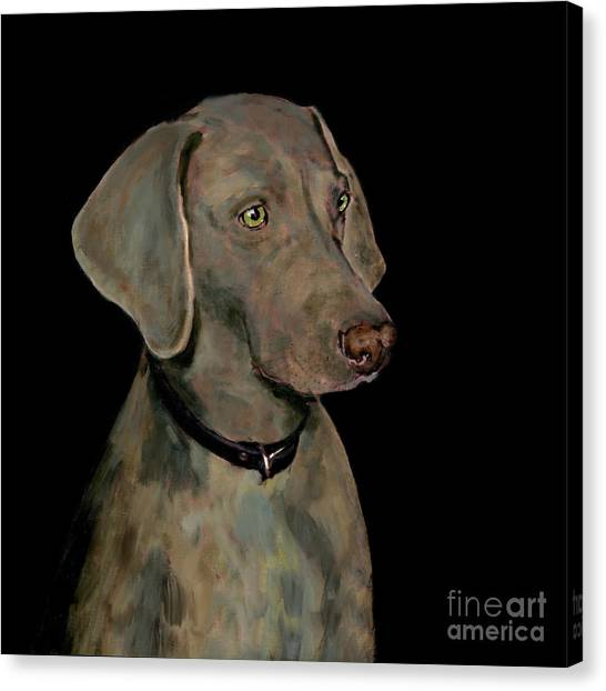 Weimaraners Canvas Print - Weimaraner by Dale Moses