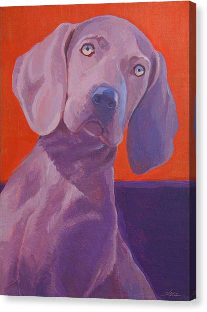 Weimaraners Canvas Print - Weimy Why Not by Shawn Shea