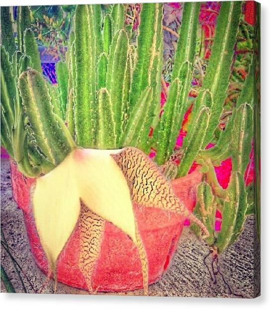 Hot Dogs Canvas Print - Weird Cactus Flower? by Kristal Cooper