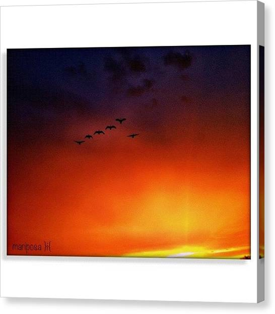 Geese Canvas Print - Welcoming by Mari Posa