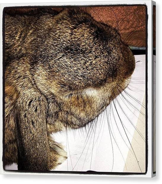 Rabbits Canvas Print - Well I Was Working Until My #rabbit by Emma Warrener