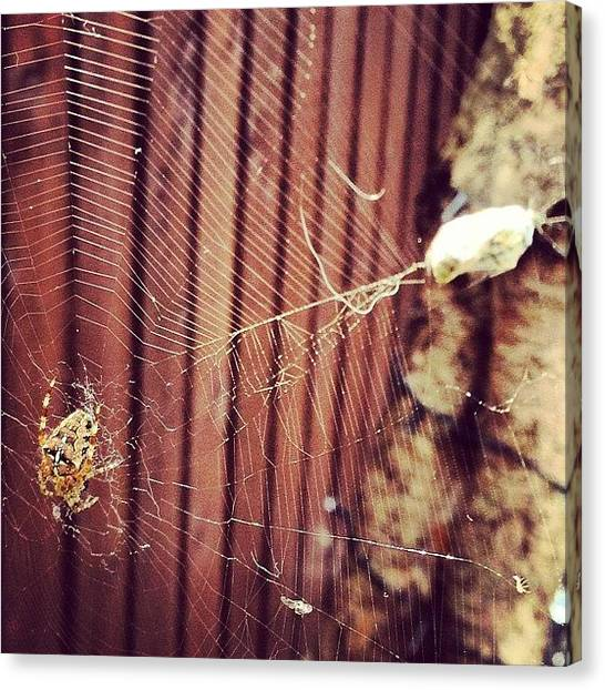 Spider Web Canvas Print - Well That's Lunch Taken Care Of by Shaun Wilders