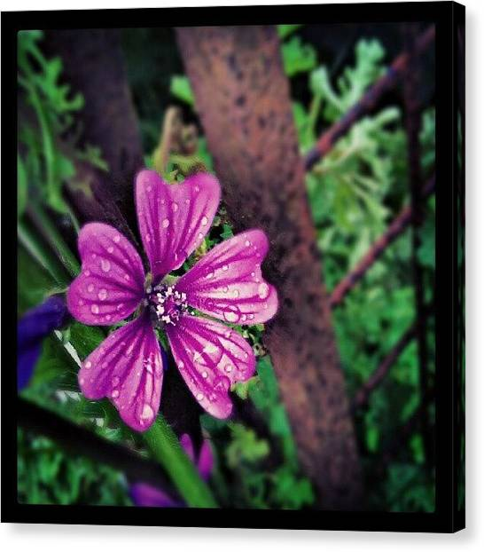 Social Canvas Print - Wet 'n Wild Flower by Vicki Field