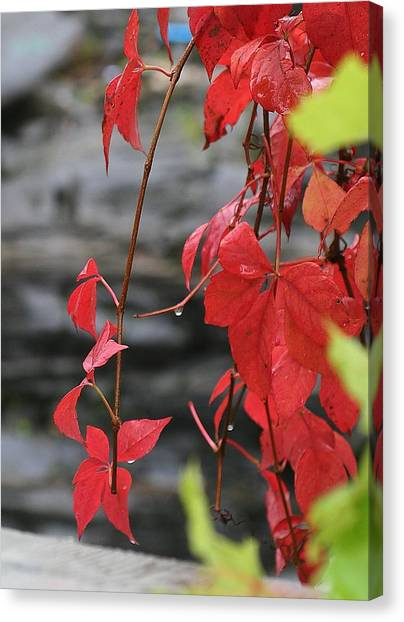 Wet Reds Canvas Print