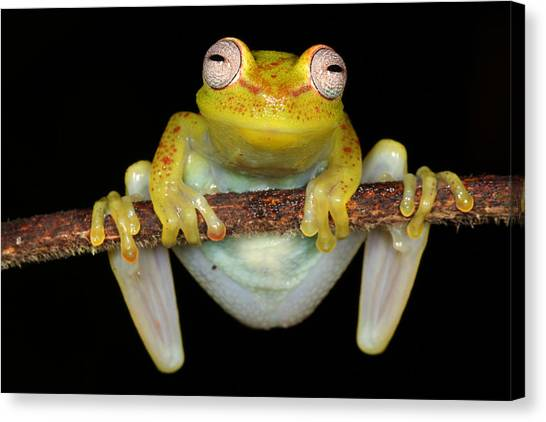 Amazon Rainforest Canvas Print - Whacha Looking At? by JP Lawrence