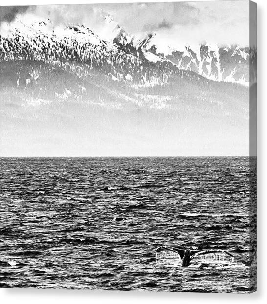 Whales Canvas Print - Whale Watching In #juneau #alaska by Carlos Caceres