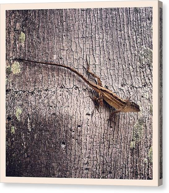 Lizards Canvas Print - What Are You Looking At? #tree #animal by Sebastiaan Van der Graaf