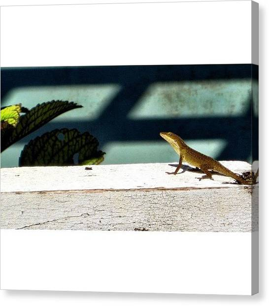 Lizards Canvas Print - Whatchu Talkin Bout, Willis?! #lizard by Elza Hayen