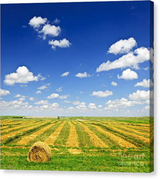 Clouds Canvas Print - Wheat Farm Field At Harvest by Elena Elisseeva