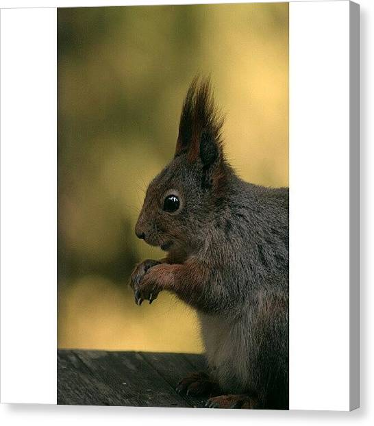 Squirrels Canvas Print - Where Is It? || Btw, I Wanna Thank You by Robin Hedberg