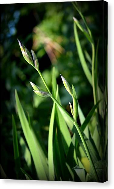 Where The Green Grass Grows.. Canvas Print by Rachel Nuest