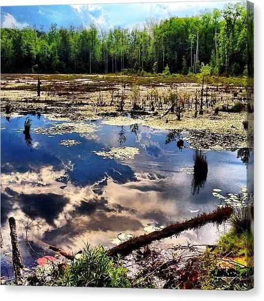 Marshes Canvas Print - Where The Swamp Things Are by Tawanda Baitmon