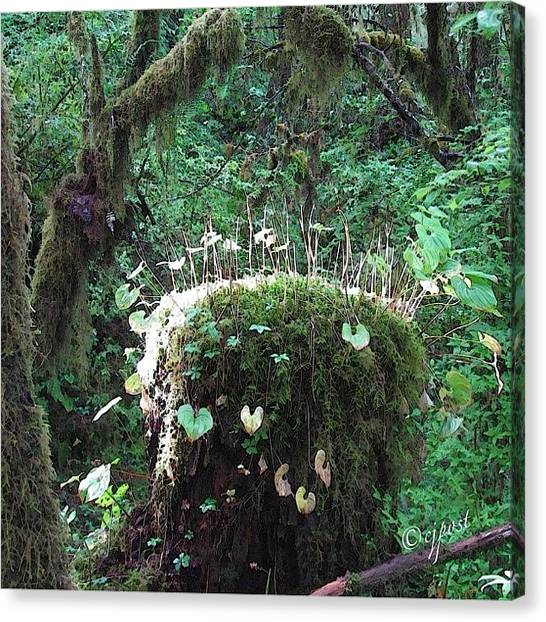 Rainforests Canvas Print - Whimsy In The Rainforest 5of5 Sept 4 by Cynthia Post