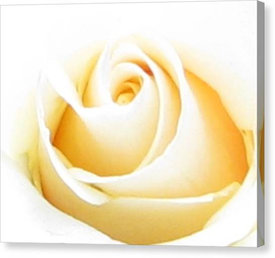 Whipped Butter Cream Rose Micros Canvas Print