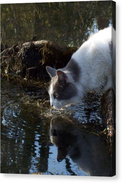Manx Cats Canvas Print - Whiskers In The Water by Pamela Roberts-Aue
