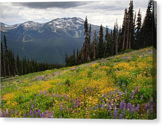Whistler Blackcomb Wild Flowers In Bloom Canvas Print by Pierre Leclerc Photography