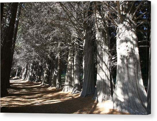 White Alley Canvas Print