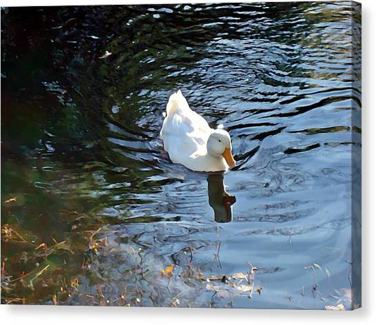 White Duck Canvas Print