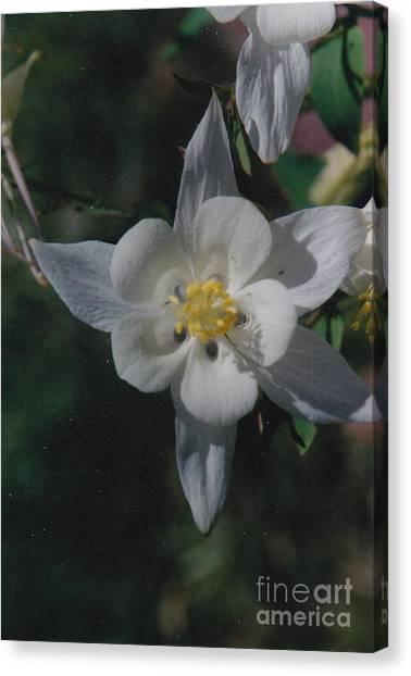 White Flower Splendor Canvas Print