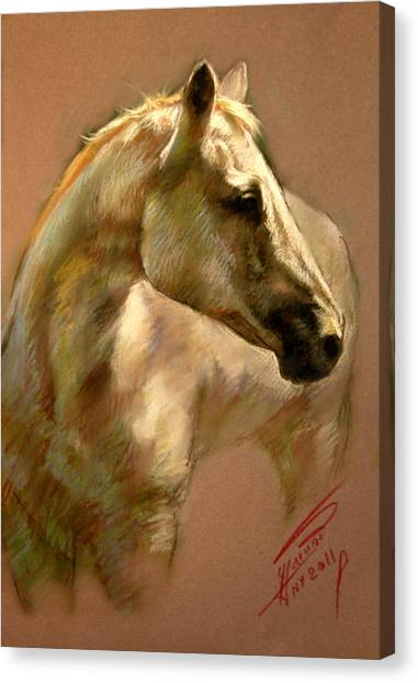 White Horse Canvas Print - White Horse by Ylli Haruni